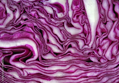 Photo Fresh red cabbage texture background