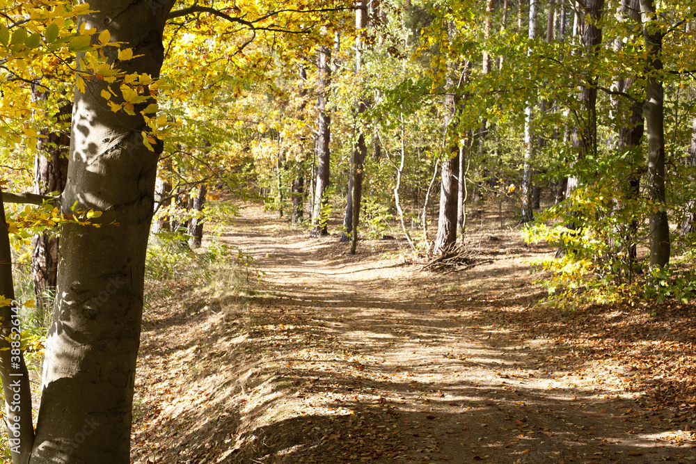 Fototapeta ciepłe jesienne światło i magia kolorów w lesie