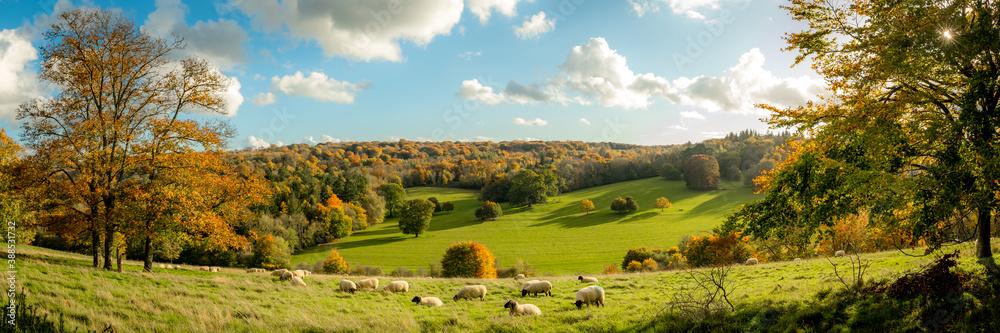 Fototapeta Autumn farmland scene of with sheep in a field in the beautiful Surrey Hills, England