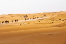 Camel Group, Caravan, Travelin...