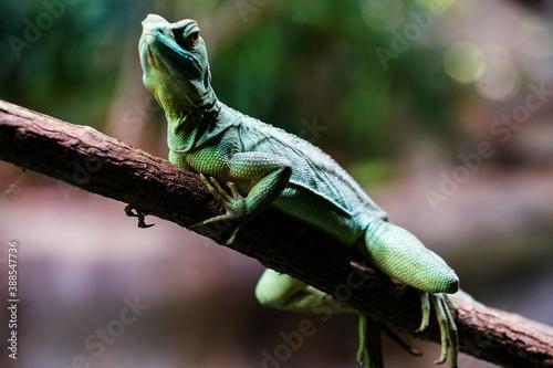 Fotografiet 枝に留まる緑色のトカゲ