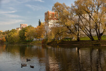 A Walking Alley With Yellow Trees At The Moscow Park In Autumn Along White Stone Walls Of The Novodevichy Convent. In The Foreground Is A Pond With Several Ducks.