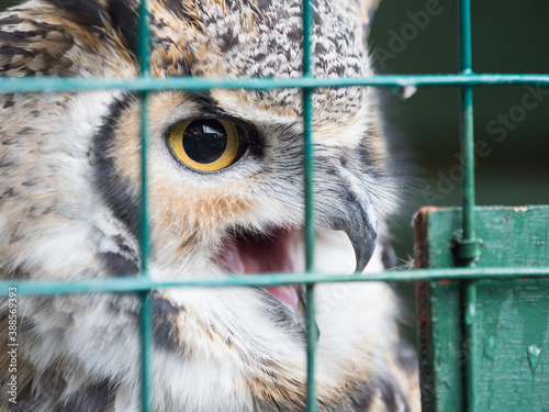 Foto A close view of a caged owl's eye through blurred mesh