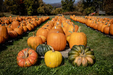 Fall Pumpkins For Sale On A Fa...