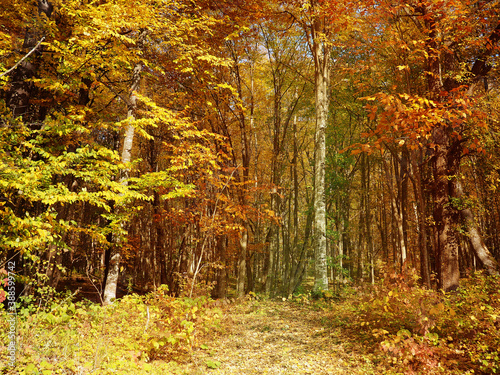 Fotomural natural background background view from the mountain to the forest below, nature