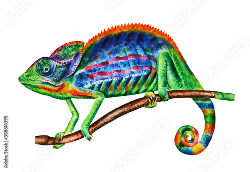 Colorful, realistic, multi-colored chameleon. Watercolor, creative hand drawn illustration. Design element, prints, posters, logos and more.