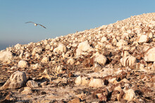 Horizontal View Of Migratory Bird Refuge Landscape. Sanctuary For Wildlife On Island Of White Rocks Covered With Guano, Located In The Gulf Of California, Mexican State Of Baja California Sur