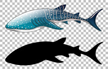 Whale Shark With Its Silhouette On Transparent Background