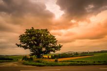 セブンスターの木と曇...