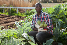 Young Positive Man Posing With Freshly Picked Artichokes At Smallholding