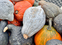 Beautiful Pumpkins And Winter ...