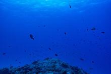 壮大で美しい海の中、沖縄北部。
