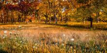 Panorama Of An Autumn Scene In...