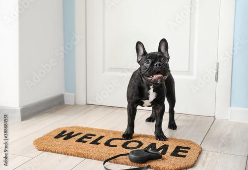 Obraz na plátně Cute funny dog near door in hallway