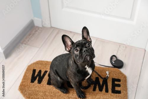 Cute funny dog near door in hallway
