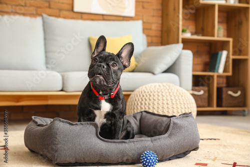 Cute funny dog in pet bed at home Canvas