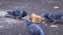 Wild Birds In The Street. Thre...