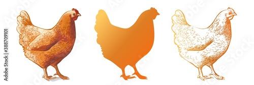 Obraz na plátně chicken, hen bird