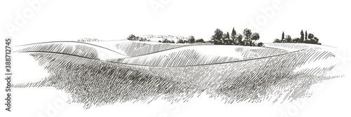 Vector sketch Green grass field on small hills Tapéta, Fotótapéta