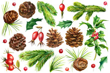 Set Of Cones, Fir Branches, Ho...