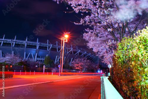 Fotografie, Obraz ライトアップされた夜桜(東京都調布市)