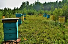 Bright Wooden Beehives In The ...
