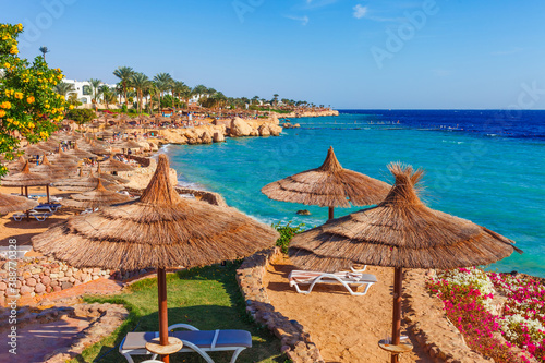 Canvastavla Sunny resort beach with palm tree at the coast shore of Red Sea in Sharm el Sheikh, Sinai, Egypt, Asia in summer hot