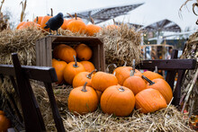 Pumpkins, Wooden Boxes And Woo...