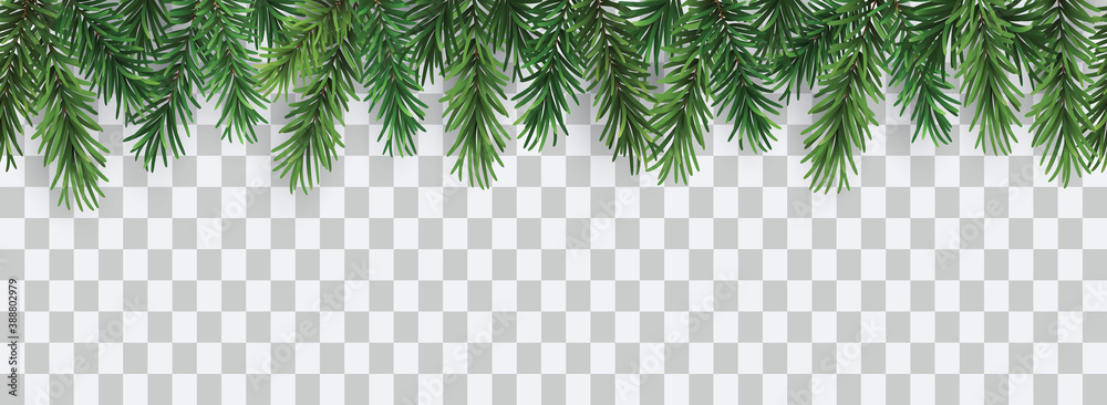 Fototapeta Vector decorative seamless christmas pattern or frame with green coniferous branches