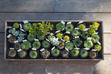 Small Succulent Plants In Flowerpots In Plant Nursery