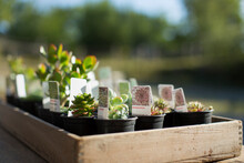 Tiny Succulent Plants With Lab...