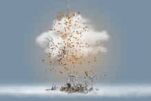 Autumn Tree And Leaves Exploding Into Cloud