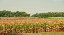 Corn Country