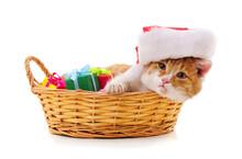 Kitten In A Santa Hat In The B...