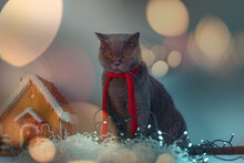 Cat Introvert Hates Holidays A...