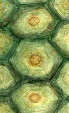 Turtle Watercolor Pattern