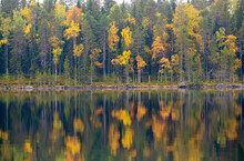 Yellow Autumn Forest With Refl...
