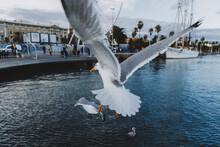 Gull Flying Over Sea.