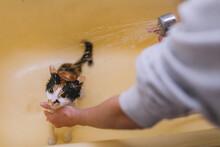 Afraid Pet Running Away From Bathtub