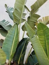 Coastline Palms