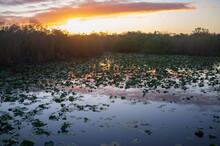 Everglades Sunrise