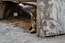 Cat In Traditional Village In ...