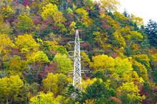 紅葉した木々に飲み込まれそうな、高圧送電線の塔
