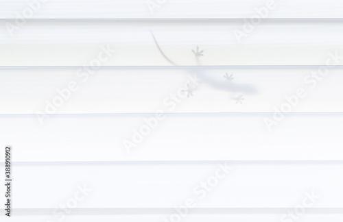 Fotografia Lizard feet perched on a white background.