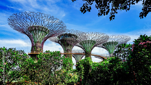 Singapore's artificial tree park scenery