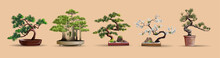 Set Of Bonsai Japanese Trees G...