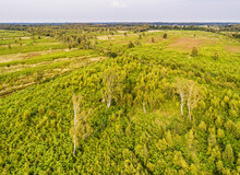 Aerial View Of Nature Reserve Aamsveen / Amtsvenn At Border Netherlands-Germany