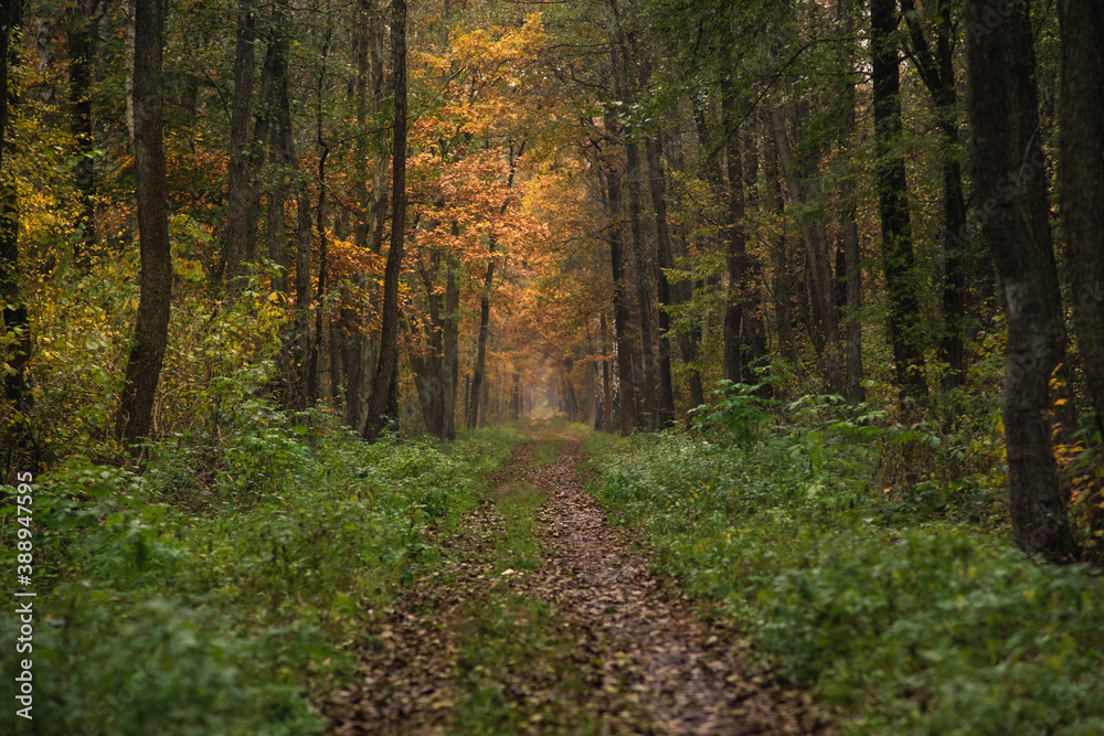 Fototapeta Ścieżka w lesie w Polsce