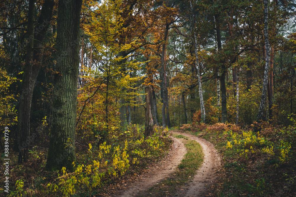 Fototapeta Kolorowa jesień w lesie w Polsce