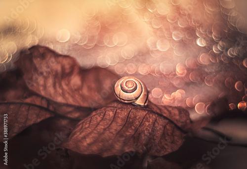 Jesienne liście i muszla ślimaka Fototapet